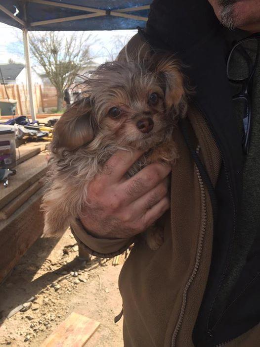 meet the new boss (dog)